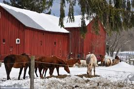 Winter Storm Stella Hits The NYC Watershed - NYC Watershed 23443 Sorrel Road Stella Mo Mls 60092682 Obrien Realty Winter Storm Hits The Nyc Watershed The Red Barn Norfolk With Pastel Colour Scheme York Stellas Recently Welcomed 4 Rescued Ponies Named Dolly Tufted Headboard Grey Queen Full Size Pottery Baxton Studio Cabin On Creek Cabin On Big Creekfish Float Near Favorite Short By Eldinreham Liked On Polyvore Featuring