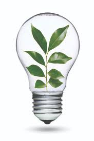green light bulb search cool sustainability pictures hommum