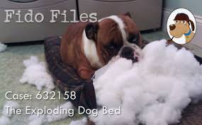 Kuranda Dog Beds by Fido Files Case Of The Exploding Dog Bed Kuranda Dog Beds