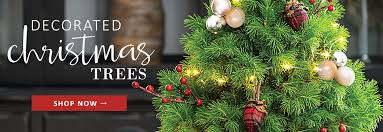 Plantable Christmas Trees Columbus Ohio by Live Rose Plants Perennials Gift Plants U0026 Garden Decor