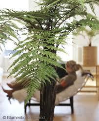 welche zimmerpflanzen sind gesund