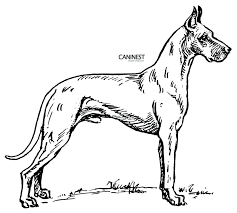 Best Cat And Dog Coloring Pages Desig 7009 Unknown