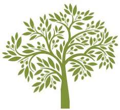 Like the olive tree drawing