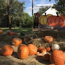 Nearby Pumpkin Patches by Anderson Mill Pumpkin Patch At Anderson Terrace Pumpkin Patches