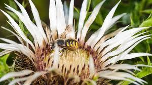 welche insekten den winter überleben
