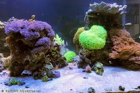 Batfish Aquatics | Aquarium Design And Aquascaping Is This Aquascape Ok Aquarium Advice Forum Community Reefcleaners Rock Aquascaping Contest Live Rocks In Your Saltwater Post Your Modern Aquascape Reef Central Online There A Science To Live Rock Sanctuary 90 Gallon Build Update 9 Youtube Page 3 The Tank Show Skills 16 How Care What Makes Great Large Custom Living Coral Aquariums Nyc
