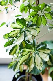 4 luftreinigende pflanzen für das büro pandoo