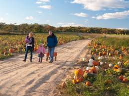 Pumpkin Picking Corn Maze Long Island Ny by Your All Inclusive Guide To Long Island Pumpkin Picking