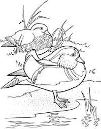 Mandarin Ducks Coloring Page