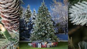 Dunhill Artificial Christmas Trees Uk by National Tree Frosted Colorado Spruce Pre Lit Youtube