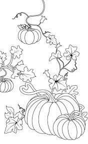 Pumpkins Pumpkins Coloring Page Pumpkins Coloring Pagefull Size for Pumpkin Vine Coloring Page