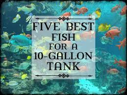 Eurolux Patio Santa Ana by 100 Fish Tank Bubbler Decoration Best 25 Aquarium Ideas