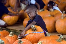 Pumpkin Patch Tampa 2014 by October Is Full Of Fun Events In Florida