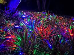 Naples Botanical Garden Light Show – New England Area Bucket List