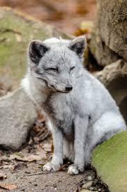 Fondos De Pantalla Bosque Animales Naturaleza Cielo Nieve