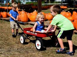 Gainesville Pumpkin Patch by Great Pumpkins Found At St Pete Church U0027s Patch Tbo Com