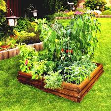 Pot Or Plot Rightsize Plant Picks For Gardening Success
