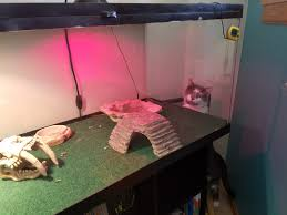 Everlast Sheds Vincentown Nj by 100 Bearded Dragon Heat Lamp Went Out Juv Beardie