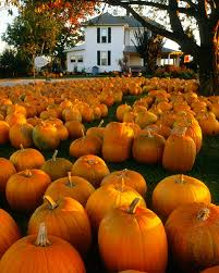 Pumpkin Patches Cincinnati Ohio Area by 27 Best The Buckeye State Images On Pinterest Cedar Point