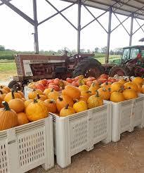 Pumpkin Patch Alabama Clanton by Isom U0027s Orchard Home Facebook