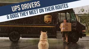 Pictures Of Dogs By UPS Drivers About Funny & Cute Dogs They Meet On ... Ups Drone Launched From Truck On Delivery Route Slashgear Check On Delivery Progress With New Follow My App Truck Spills Packages Inrstate Nbc Chicago Driver Crashes After Deer Jumps Through Window Wpxi Man Unloading Packages Washington Dc Usa Launches Drone From Flite Test How To Become A Driver To Work For Brown Twitter Hi Dwight The Package Cars Are Routes That Drivers Never Turn Left And Neither Should You Travel Leisure Ups Man Stock Photos Images Alamy This Is Pulling A Trailer Mildlyteresting What Can Tell Us About Automated Future Of Wired