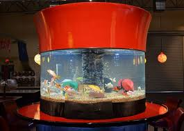 Spencers Lava Lamp Fish Tank by 74 Best Tanked Images On Pinterest Animals Planet Fish Tanks