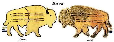 Bison Cribbage Board