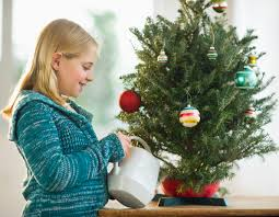 Popular Christmas Tree Species by What Should I Add To The Christmas Tree Water