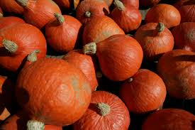 Pumpkin Picking Long Island Ny by A Guide To Fall Pumpkin Picking Cbs New York
