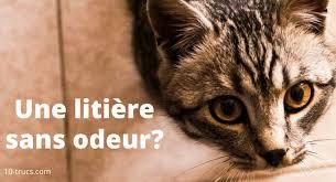 odeur de litière à chat 10 trucs contre cette mauvaise odeur