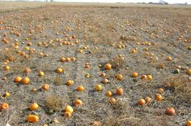 Skinny Bones Pumpkin Patch Food by Don U0027t Miss These 19 Great Pumpkin Patches In Nebraska This Fall