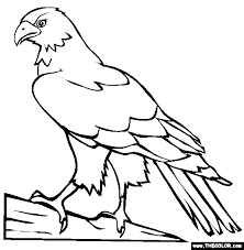 Perched Hawk Coloring Page