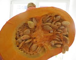 Feeding Dog Pumpkin Constipation by Pumpkin For Cats Psl Recipe Meow Lifestyle
