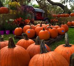 Gainesville Pumpkin Patch by 20 Central Florida Pumpkin Patches And Corn Mazes To Put You In
