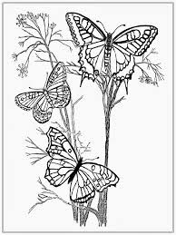 Free Printable Coloring Butterfly Pages For Adults 62 In Kids Online With