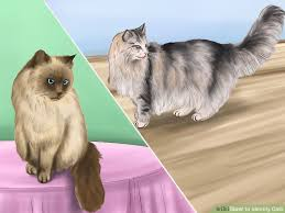haired cats how to identify cats 11 steps with pictures wikihow