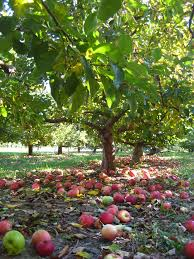 Apple Shed Inc Tehachapi Ca by 20 Best I Love All Orchards Images On Pinterest Orchards