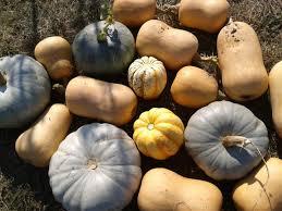 Varieties Of Pumpkins Uk by The Ten Most Attractive Vegetables To Grow Sarah Raven