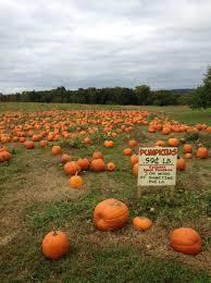 Pumpkin Patch Lafayette La by Top 10 Things To Do Near Stormville Airport Antique Show U0026 Flea Market