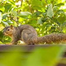 stopping squirrels and chipmunks