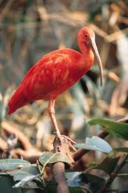 What Is The Symbolism Of A Bleeding Tree In The Scarlet Ibis