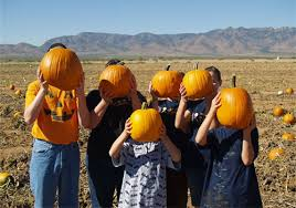 Pumpkin Patch Power Rd Mesa Az by Fall Pumpkin And Corn Maze Festivals Fill Your Plate Blog