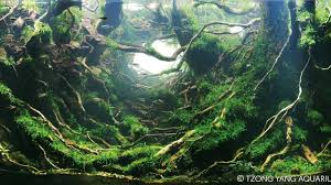 Awesome Aquascaping Gallery (IIAC) | European Aquascape Channel The Green Machine Aquascaping Shop Aquarium Plants Supplies Photo Collection Aquascape 219 Wallpaper F Amp 252r Of The Month October 2009 Little Hill Wallpapers Aquarium Beautify Your Home With Unique Designs Design Layout New Suitable Plants Aquariums Pinterest Pics Truly Inspired Kinds Ornamental Aquascaping Martino Agostini Timelapse Larbre En Mousse Hd Youtube Beauty Of Inside Water Garden Inspirationseekcom Grass Flowers Beautiful Background