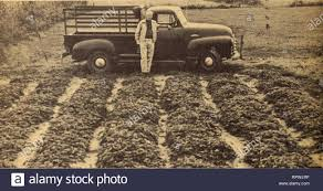 100 Truck For Sale In Maryland Allens 1955 Book Of Berries Nurseries Horticulture