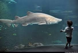 aquarium geant a visiter belgique nausicaa centre national de la mer boulogne sur mer 2018 ce