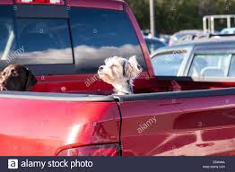 Cute Small Dogs Peeking Out Of Red Pickup Truck Bed, USA Stock Photo ... 2005up Frontier 5 Micro Bed Four Door Crew Cab 12volt Led Light For Truck Cgogear Accsories Sears Cm Review And Install Flatbed Truck Bed A Dodge Chevy Long Srw 84x56x38 Truxedo Lo Pro Qt Invisarack Tonneau Cover In Stock Wade 7201191 Tailgate Cap Black Smooth Finish 1988 Easy Sleeping Platform Highpoint Outdoors 11 Pickup Hacks The Family Hdyman Fall Guy First Opening Of Door Youtube Border Patrol Finds 14 Million In Drugs Hidden Metal