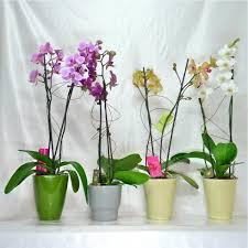 pot ou cache pot pour une plante d orchidée