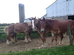 Amish Horses Amish Horses April 2016 For Sale Featured Listings Kalona Homes For Property Search In Single Familyacreage Sale Iowa 20173679 Tours Chamber September 2014 Ia Horse Auction Pictures Of Amana Colonies Day Trip To Girl On The Go