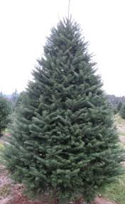 Christmas Tree Farm Near Lincoln Nh by Our Trees Hidden Meadows Tree Farm Christmas Trees From Bath