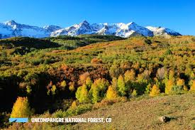 Christmas Tree Permits Durango Colorado by Uncompahgre National Forest Outthere Colorado